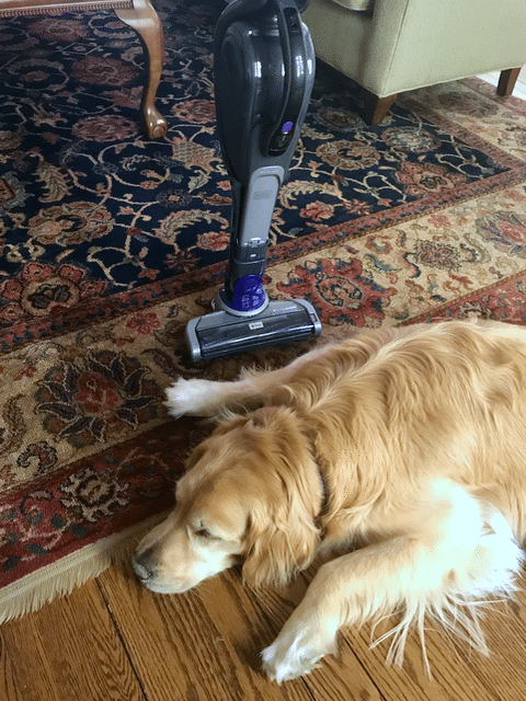 New BLACK+DECKER Pet Vacuums (1)