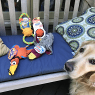 Best Toys for Your Dogs Play Pattern