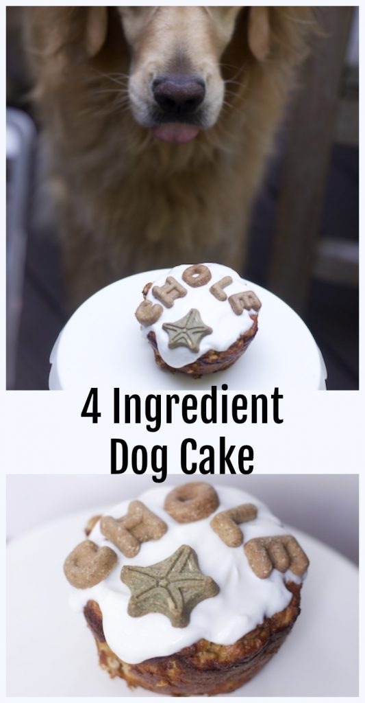 Easy Homemade Dog Birthday Cake Recipes