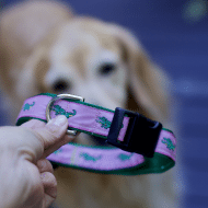 How to Make Adjustable Dog Collar: DIY Pet Projects: