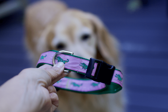 DIY Pet Projects- Adjustable Collar