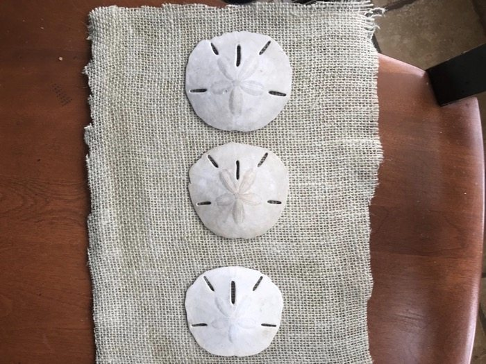 sand dollar crafts