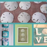 Three Sand Dollar Crafts To Remind You of Your Beach Vacation
