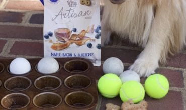 Dog Games to Play with Dog Treats that Taste Homemade