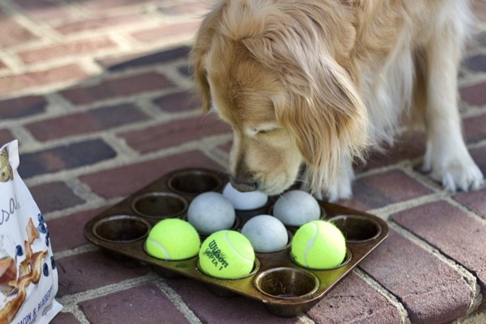 Dog Games to Play with Dog Treats