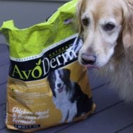 Superfood-Packed Dog Food from AvoDerm for Healthy Skin & Beautiful Coat