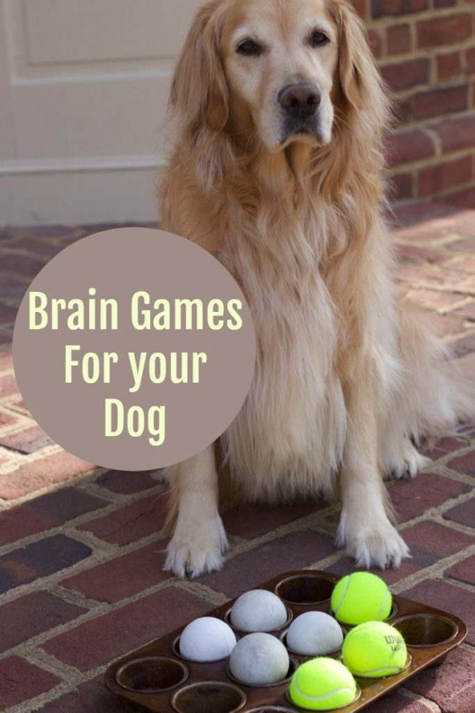 brain games for dogs p