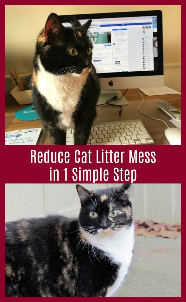 How to Stop Cat Litter Mess (One Easy Step)
