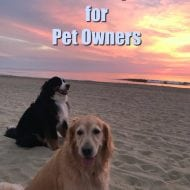 Stress Free Travel Tips for Pet Owners