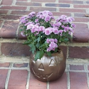 How to Make Inexpensive DIY Pumpkin Planters