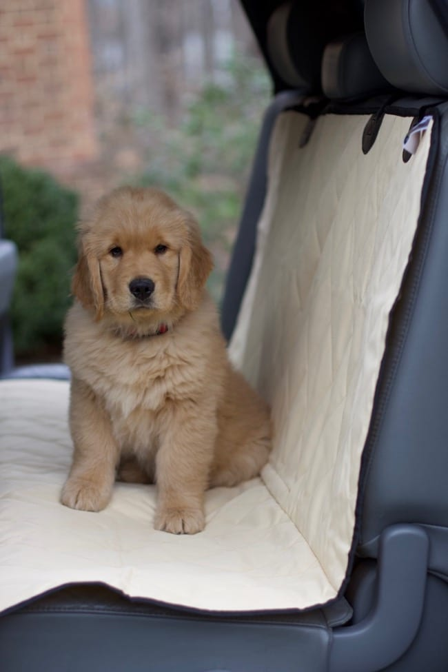 puppy essentials Seat cover