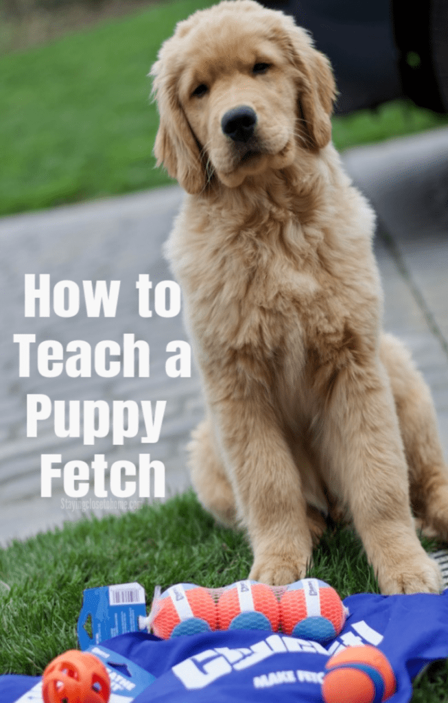 How to Teach a Puppy To Fetch With Our Favorite Chuckit!