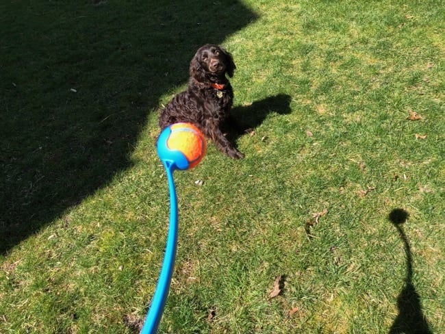 How to Teach Puppy Fetch With Chuckit!