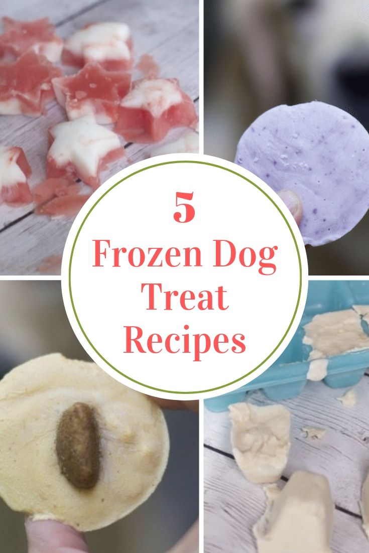 6 Easy Frozen Dog Treats To Make This Summer