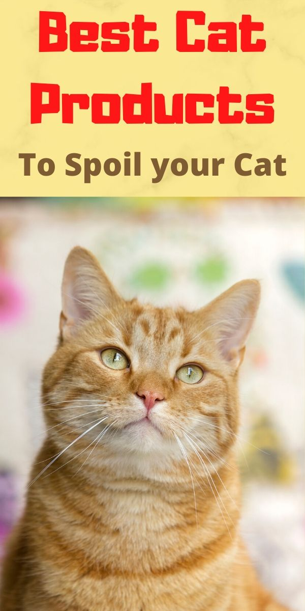 Best Cat Products to Spoil Your Cat!