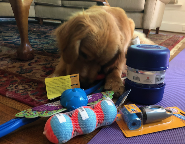 Best Dog Toys To Have Right Now