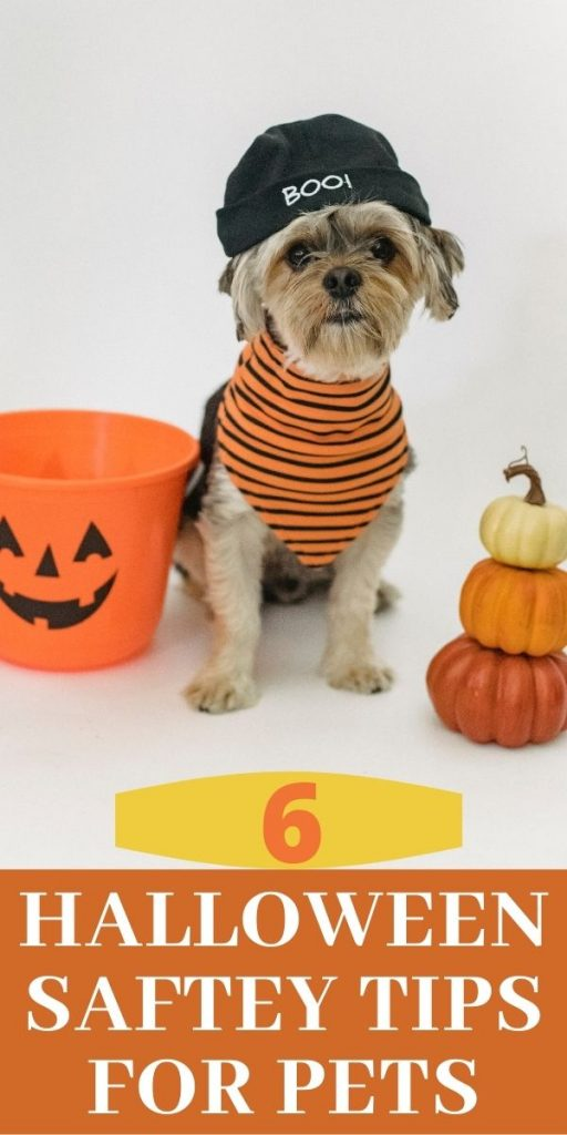 Halloween-Tips-for-dogs