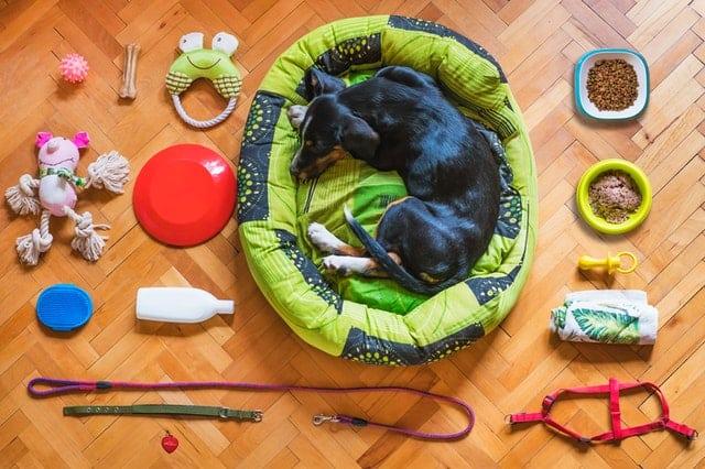 dog-gift-ideas-toys